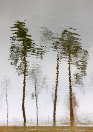 Trees reflection in water. Water reflection upside down create mosaic trees.
