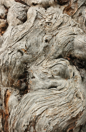 Bark texture of old juniper. The time-bent trunk of the old juniper. Stock Photo