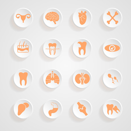 sistema reproductor femenino: Cuerpo Iconos sombras bot�n conjunto de vectores