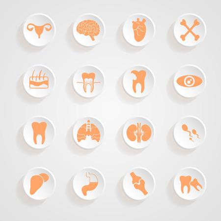 Body Icons button shadows  vector set Illustration