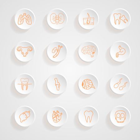 Vector set of contour of internal human  Icons button shadows  vector set Иллюстрация