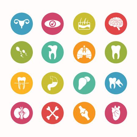 bowel surgery: Human anatomy icons set Circle Series Illustration