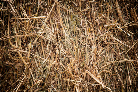 Brown rice straw used as a background photo