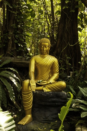 This picture shows the mercy of Golden Buddha to the creatures. Wehn we look at this, we can feel the calm and purity of our minds from the inner self. Stock Photo