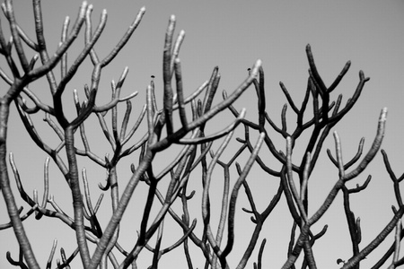 The monochrome of grey branches of tree. Stock Photo