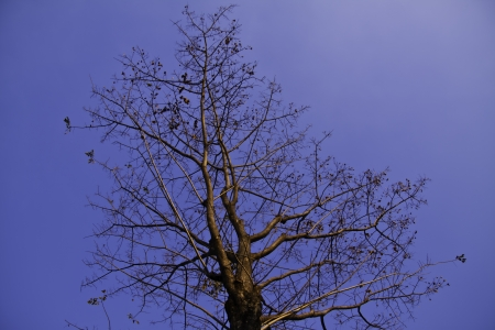 The beautiful tree in the blue sky. photo