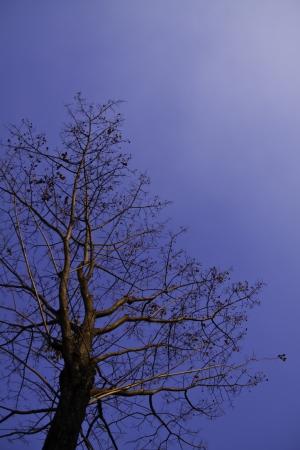centenarian: El hermoso �rbol en el cielo azul.