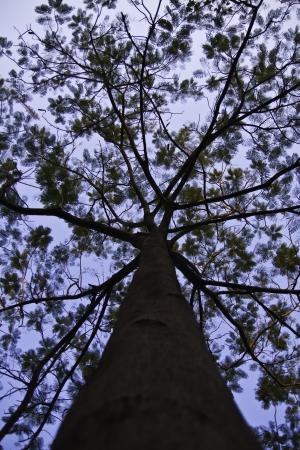 buche: Der sch�ne Baum in den blauen Himmel.
