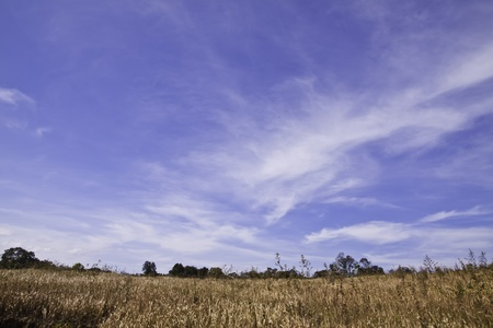 The field of golden grass with the clear blue sky. photo