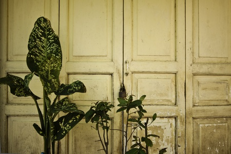 The old vintage grungy door with the green bushes. photo