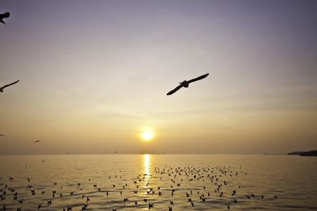 hoard: The hoard of seagulls flies freedomly at the beautiful seashore landscape of Bangphu of Thailand