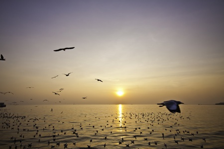 The hoard of seagulls flies freedomly at the beautiful seashore landscape of Bangphu of Thailand  photo