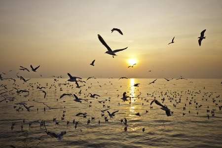 immigrate: The hoard of seagulls flies freedomly at the beautiful seashore landscape of Bangphu of Thailand.
