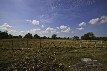 The beautiful rural landscape of the tropical meadows. Stock Photo - 13091776