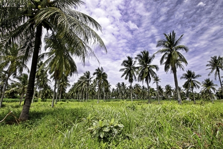 greening: The beautiful natural landscape of tropical greening field of Thailand. Stock Photo