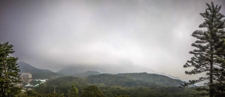 nirvana: The Big tree scenery