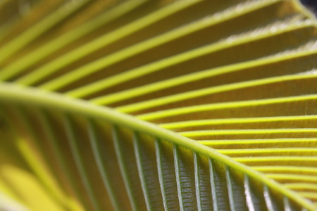 leaf vein: Texture of Leaf vein with shade and light Stock Photo