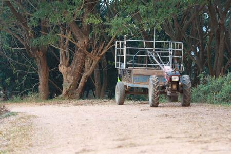 samanea saman: Pushcart