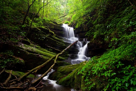 background waterfalls: Deep forest Waterfall