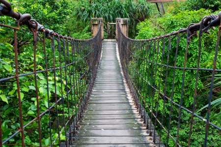 Rope walkway through the treetops in a rain forest photo