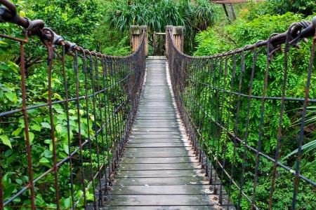 vlonder: Touw wandelpad door de boomtoppen in een regenwoud