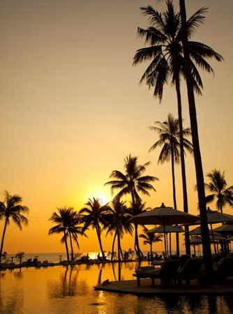 Palm forest silhouettes on sunrise photo