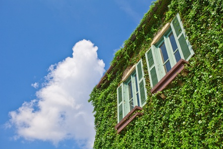 Windows on a wall covered with grapes vine photo
