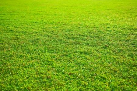 beautiful green yellow grass in garden photo