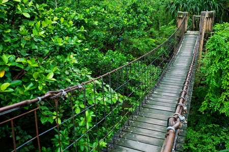 Rope walkway through the treetops in a rain forest Stock Photo - 9443345