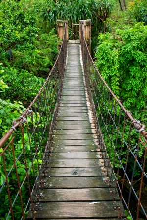 통로: 열대 우림에서 나무를 통해 로프 산책로 스톡 사진