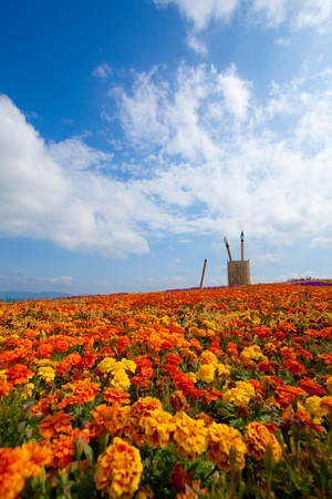 summer field of red flower on a background blue sky Stock Photo - 9503550