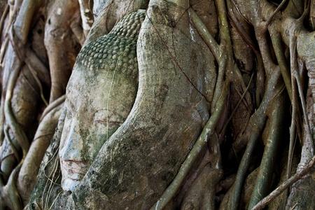Head of Sandstone Buddha at Ayutthaya.Thailand. photo