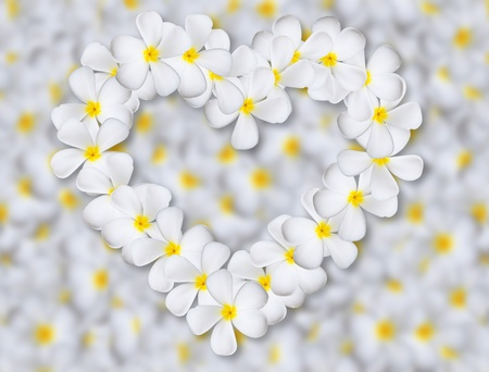 Plumeria flowers heart on flower background photo
