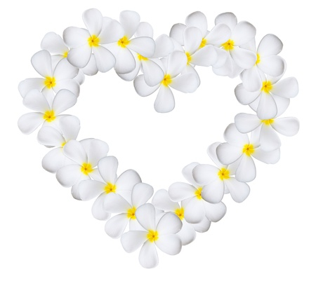 plumeria on a white background: Plumeria flowers heart isolated on white background