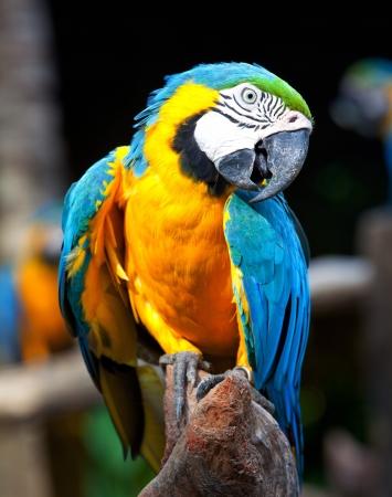 loro: Guacamaya colorida sentado en un árbol