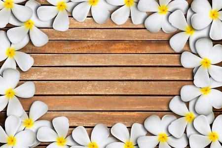 White plumeria flower frame on Wood Pattern photo