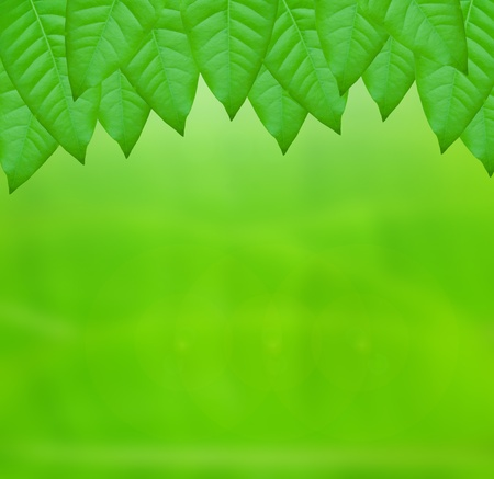 green leaves over abstract background Stock Photo - 9658954