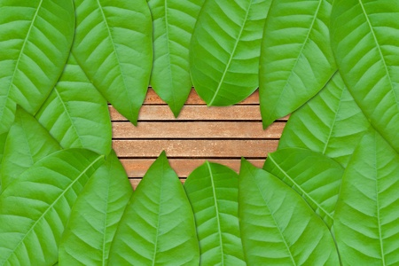 green leaves on wood background Stock Photo - 9659276