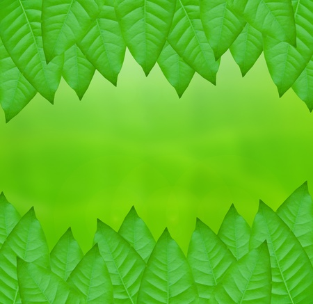 green leaves over abstract background Stock Photo - 9658787