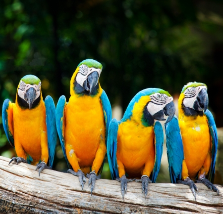 colorful four macaw sitting in a tree