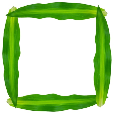 green leaves frame on white background Stock Photo - 9734292