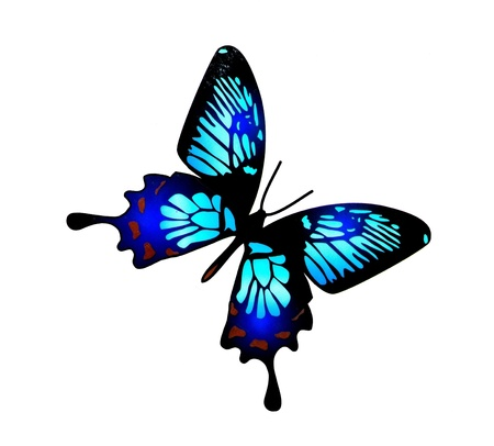 Paint watercolor butterfly on white background photo