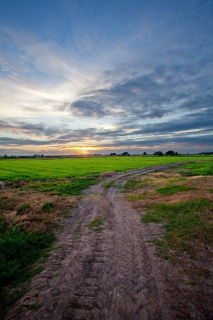 Off-road track in country Stock Photo - 9837593