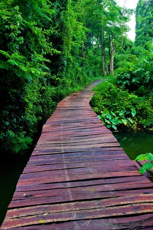 rope bridge: Rope walkway through the treetops in a rain forest