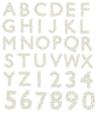 Plumeria alphabet on white background photo