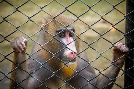 a monkey in the cage of zoo photo