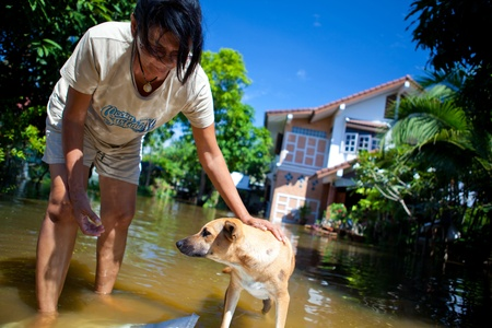 thailand flood: AYUTTHAYA - OCTOBER 9, 2011: Women rescue dog from flood of October 9, 2011 in Ayutthaya, Thailand.