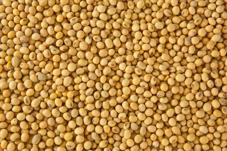 soya: patrón de frijol de soja como telón de fondo