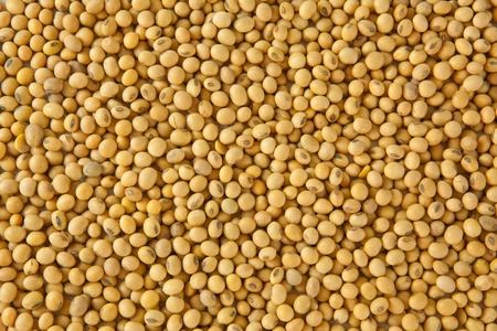 soy bean pattern as background Imagens