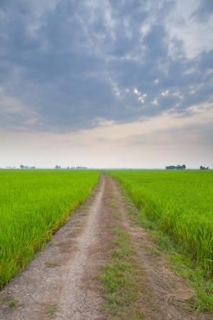 iszapos: Off road pálya kaland a mezőgazdasági ország Stock fotó